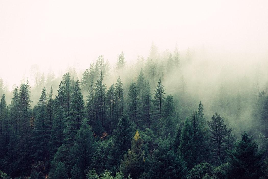 zapachy drzewne